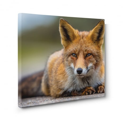 Wall Chimp Red Fox Canvas Print